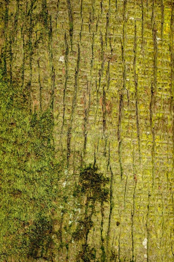 作为背景的棕榈树树干 库存照片