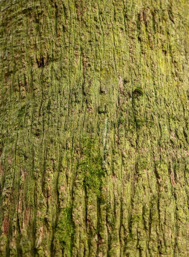 作为背景的棕榈树树干 免版税图库摄影
