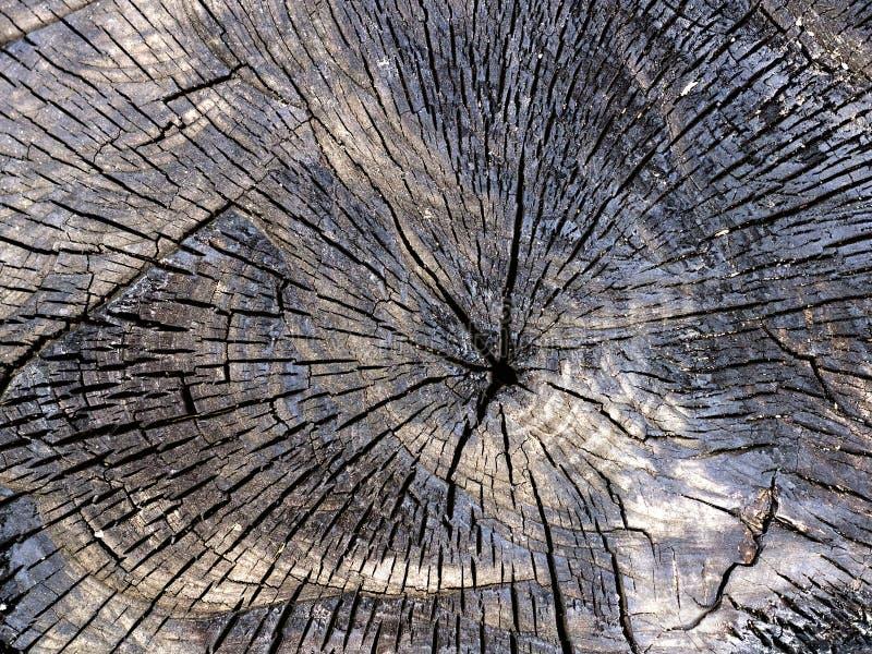 作为背景的被烧焦的树桩特写镜头 图库摄影