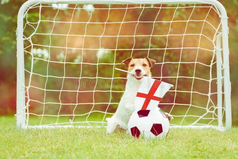 作为英国国家队滑稽的爱好者的狗与旗子的在国际竞争中的支持他的队 图库摄影