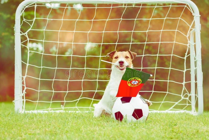 作为葡萄牙国家队滑稽的爱好者的狗与旗子的在国际竞争中的支持他的队 免版税库存图片
