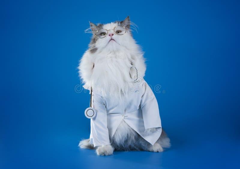 猫博士 图库摄影