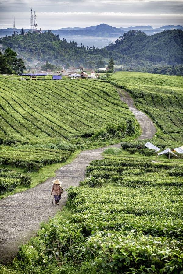 作为走在winiong路的农夫的人们, 免版税库存图片