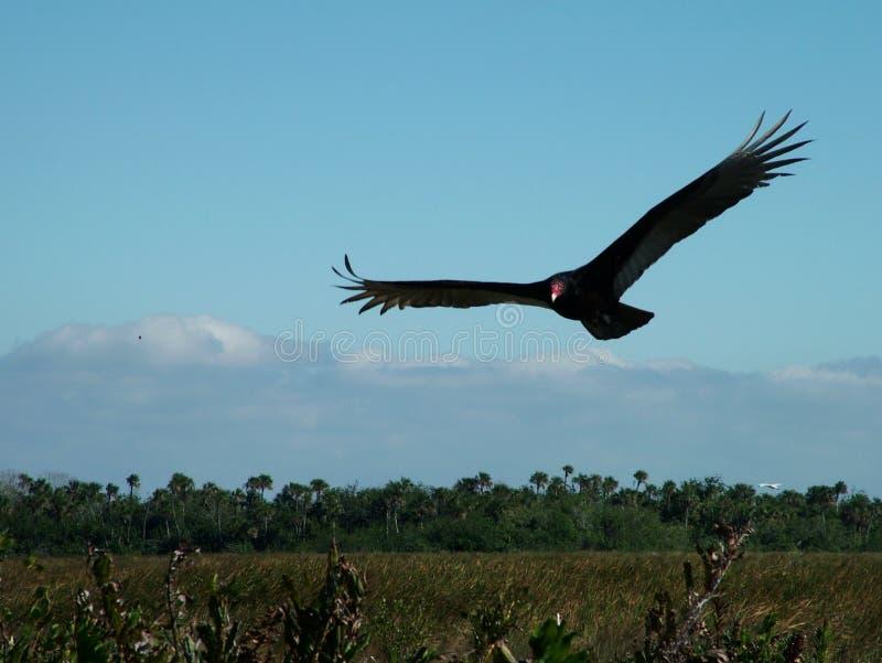 作为鸟释放 图库摄影