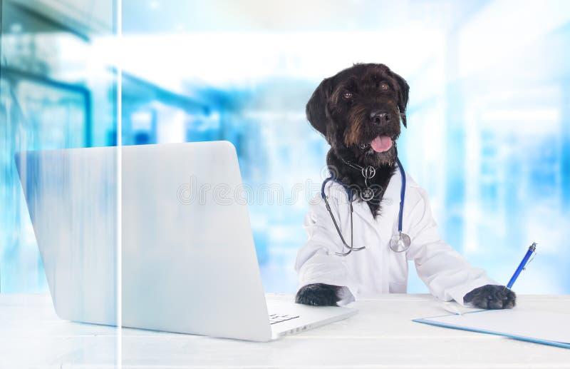 作为医生穿戴的狗坐在与笔记本的桌后 免版税库存图片