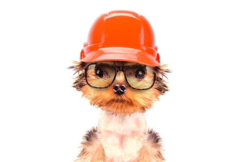 作为建造者穿戴的狗 免版税库存图片