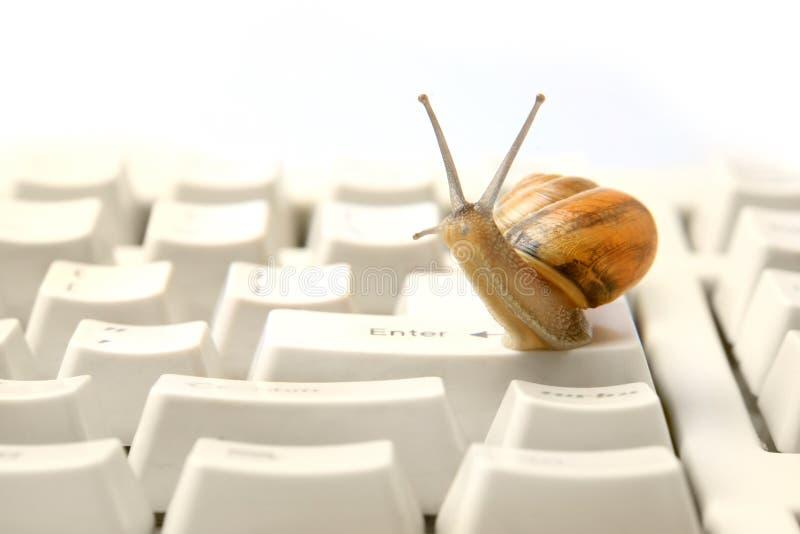 作为comuter慢的蜗牛 免版税库存图片