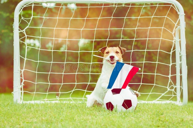 作为Netherland国家队滑稽的爱好者的狗与旗子的在国际竞争中的支持他的队 免版税库存图片