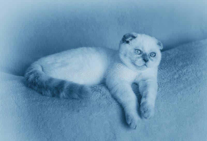 作说谎在沙发的小的小猫 免版税库存照片