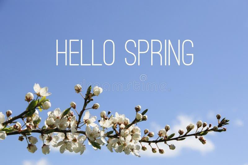 你好春天文本和开花的树枝在蓝天背景 免版税库存图片