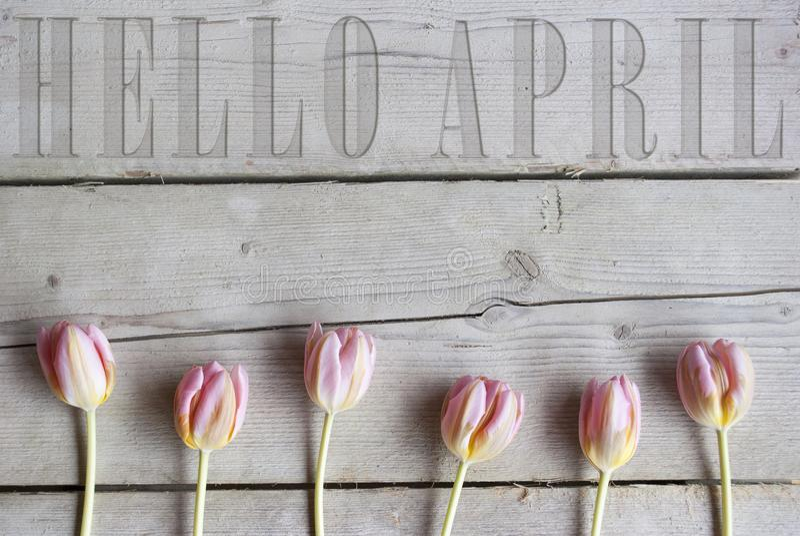 你好4月在葡萄酒木背景雕刻了,与开花的桃红色春天郁金香 库存图片
