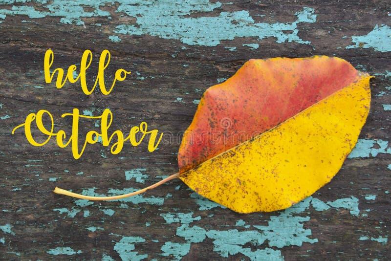 你好10月 在蓝色的五颜六色的白杨木树叶子上色了老木纹理 秋季概念 库存照片