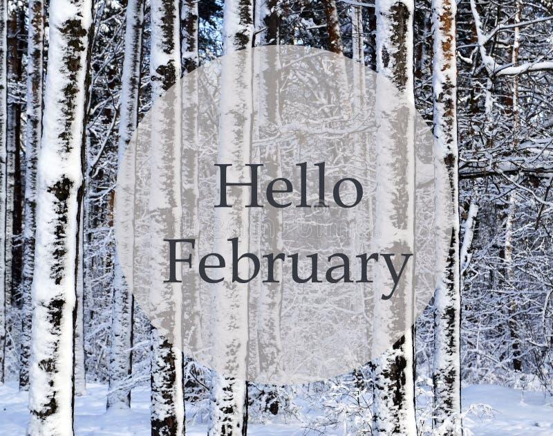 你好2月 报道的森林雪冬天 在以后的斯诺伊树降雪 免版税库存图片