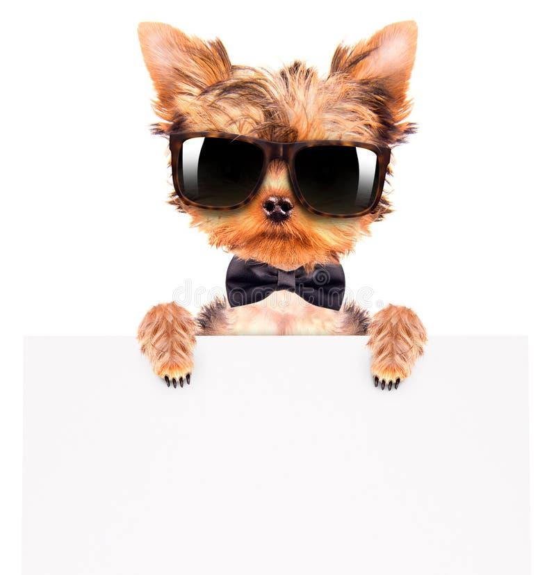 佩带一把脖子弓和树荫与横幅的狗 库存照片