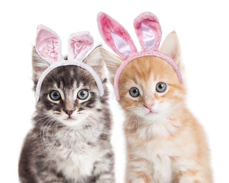 佩带复活节兔子耳朵的两只小猫 免版税库存照片