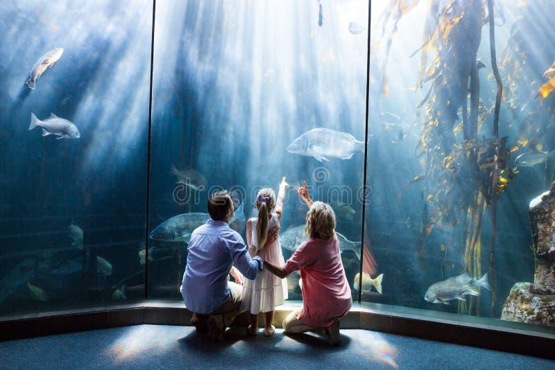 佩带的家庭看鱼缸的观点 图库摄影