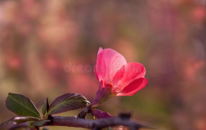 佩带的春天颜色 库存图片