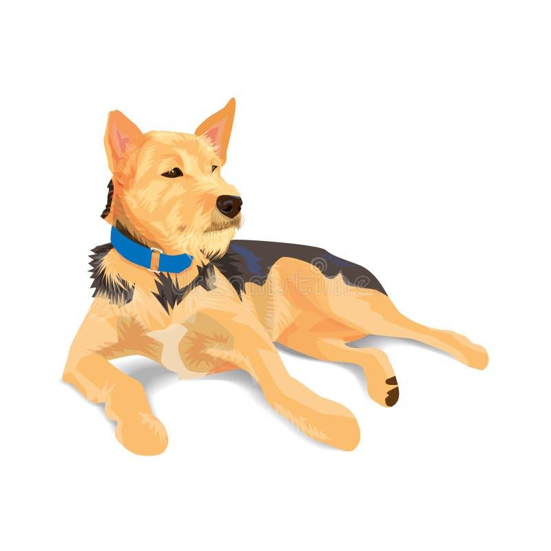 佩带蓝领的杂种棕色狗说谎在白色 向量例证