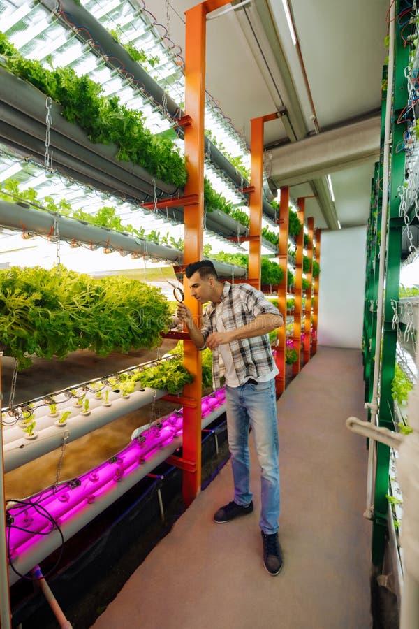 佩带被摆正的衬衣身分的深色头发的农业学家自温室 免版税库存照片