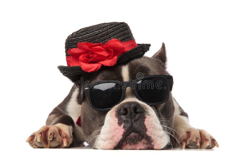 佩带黑帽会议和太阳镜休息的可爱的美国恶霸 免版税库存照片