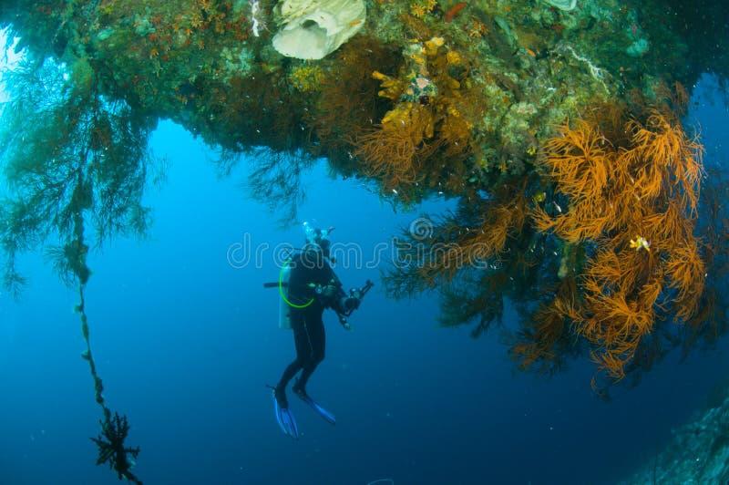 佩戴水肺的潜水潜水者kapoposang苏拉威西岛水下的印度尼西亚 图库摄影