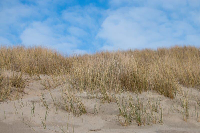 使与海滩草、沙子和蓝天的场面靠岸 免版税库存图片