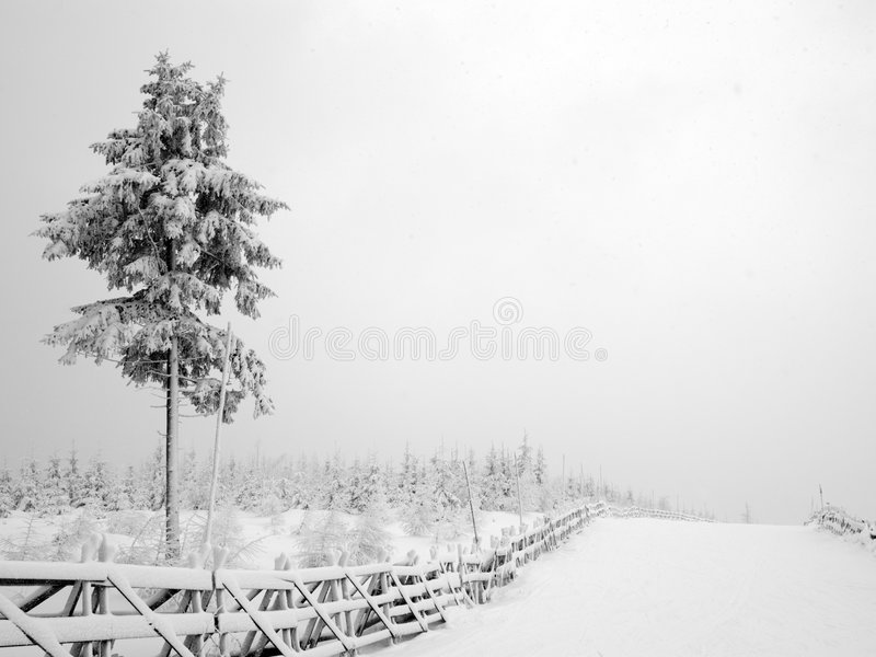 使冬天环境美化 图库摄影