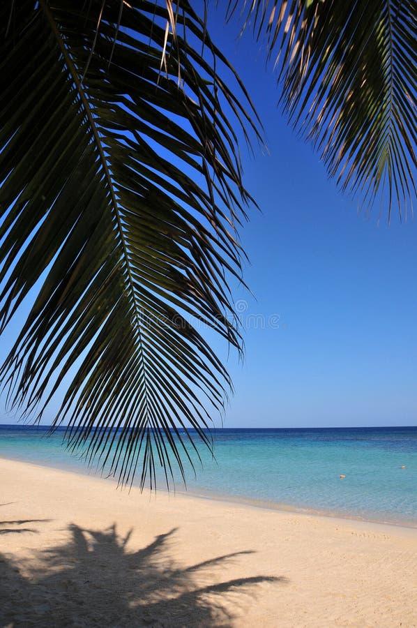 使加勒比热带靠岸 库存图片