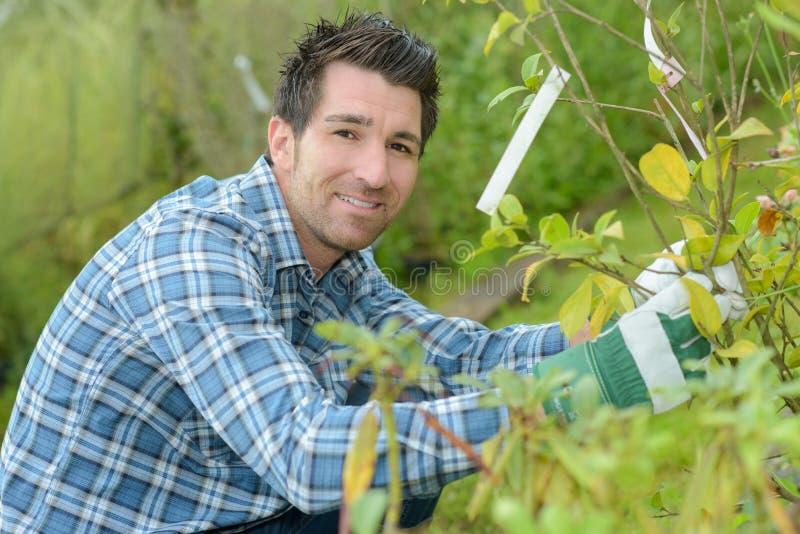 使和小心植物环境美化的英俊的年轻人花匠 图库摄影