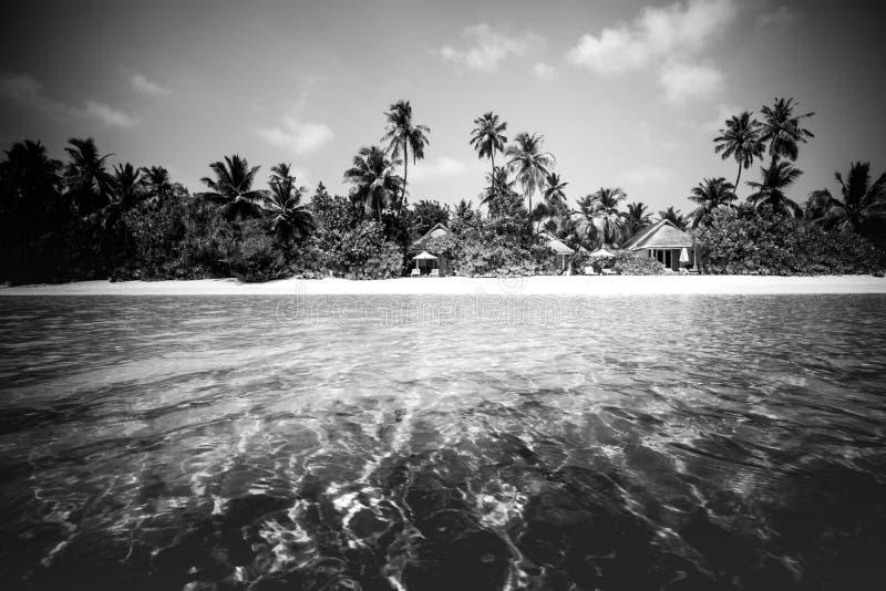 使在掌上型计算机沙子场面夏天树型视图白色的美好的梦想本质靠岸 在白色沙滩和令人惊讶的海的美丽的棕榈树 暑假和假日概念 库存照片