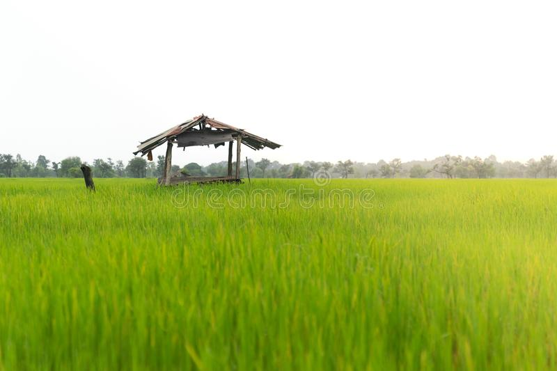 使在绿色米领域的老村庄客舱环境美化 免版税库存图片