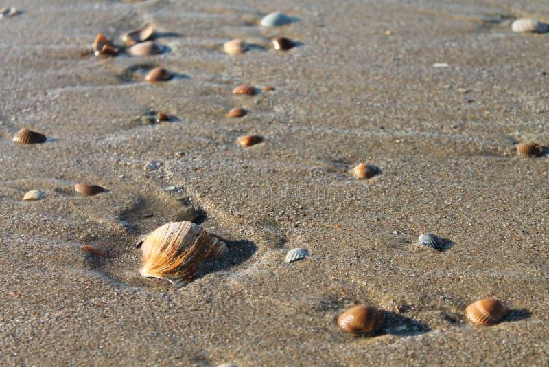 使壳靠岸 库存图片