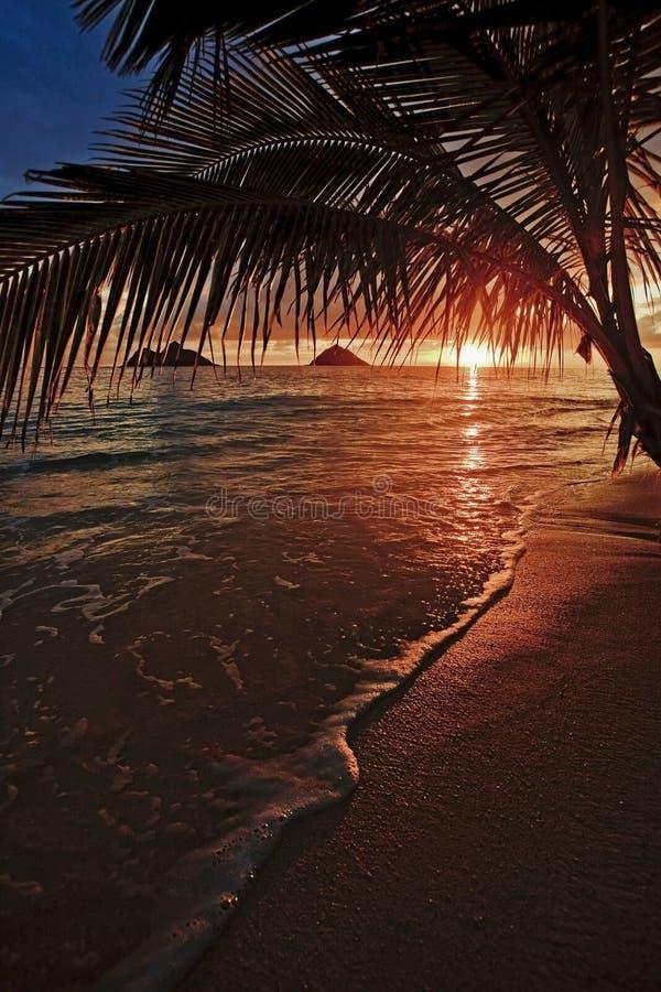 使夏威夷lanikai太平洋日出靠岸 免版税库存照片