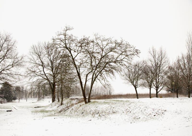 使多雪的结构树环境美化 图库摄影