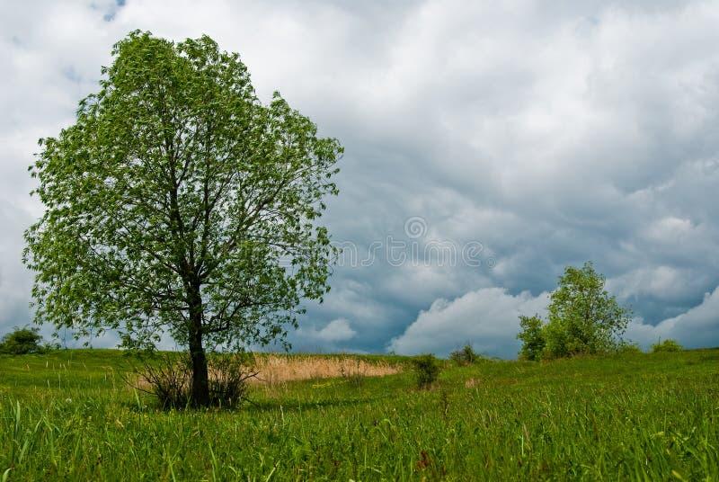 使春天环境美化 库存照片
