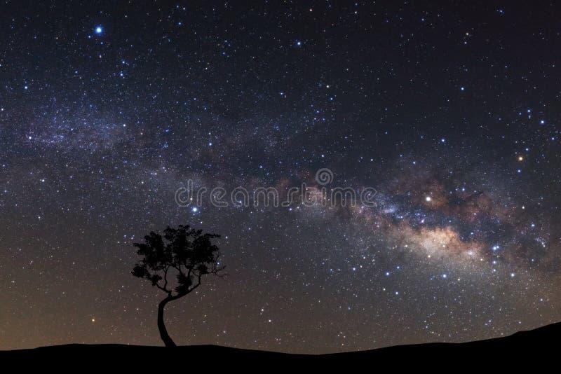 使树环境美化剪影与银河星系和空间dus的 免版税库存照片