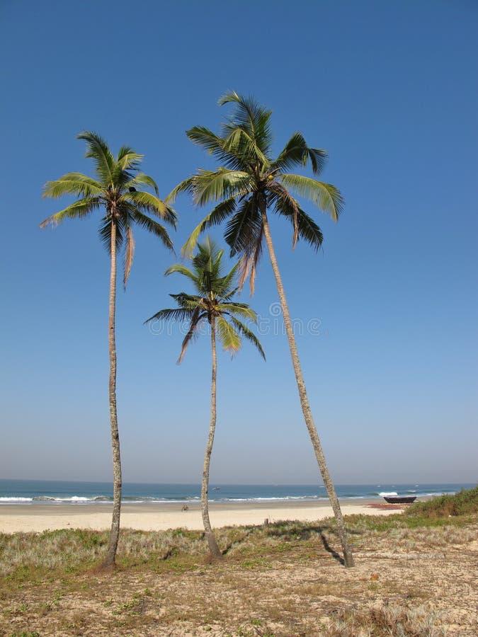 使椰子树靠岸 免版税库存图片