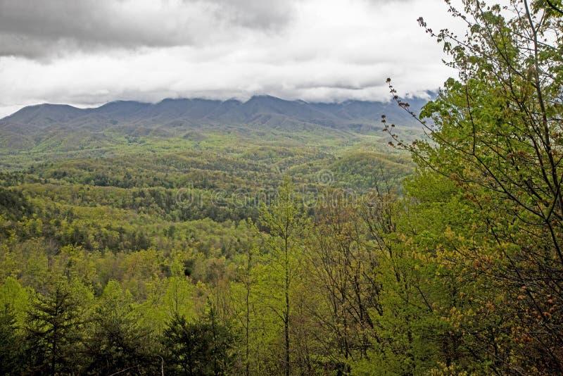 使模糊在山和绿色叶子在发烟性山的谷 库存照片