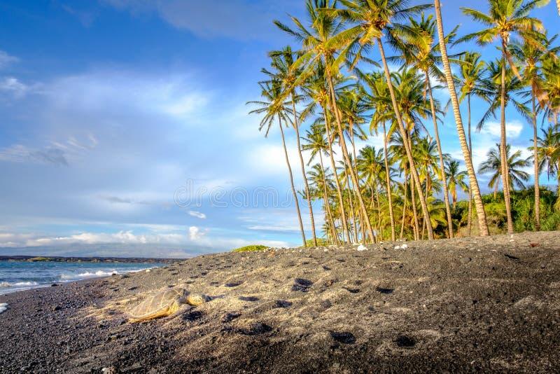 使海洋海滩环境美化看法与棕榈树和海龟的 库存图片