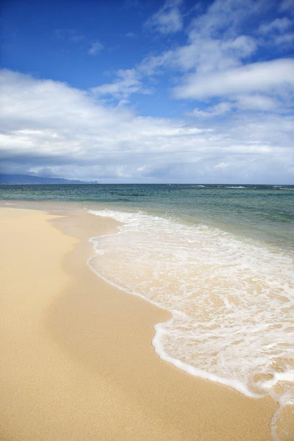 使热带靠岸 免版税库存照片