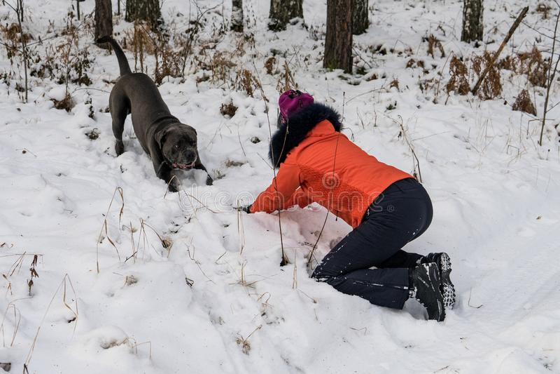 使用与一条狗的女孩在森林里 库存图片