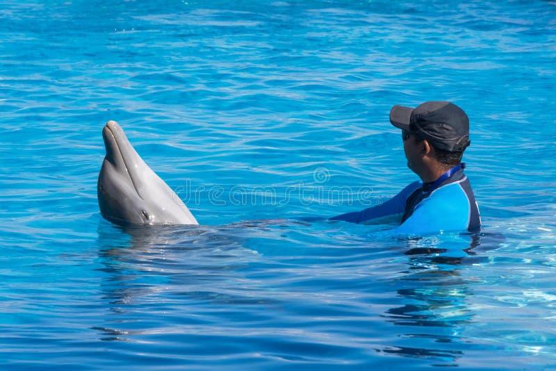 使用与在水池的一只海豚的教练员 免版税库存图片