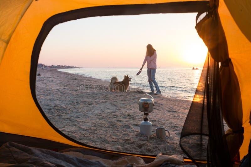 使用与在海滩的一条狗的女孩 库存照片