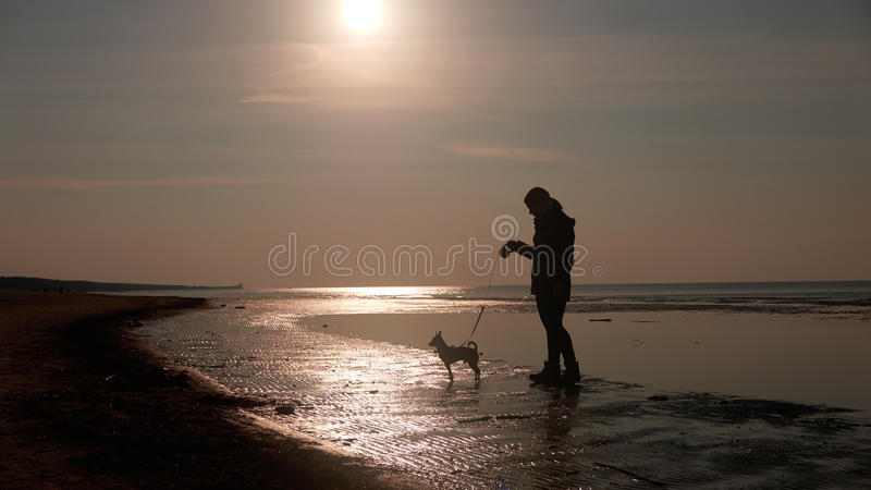 使用与在海滩的狗的女孩 图库摄影