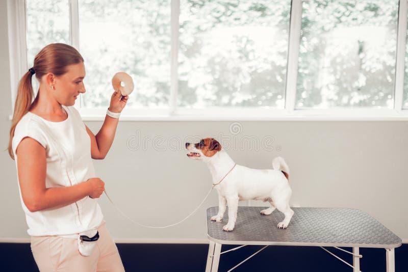 使用与在金属桌上的逗人喜爱的白色狗身分的狗专家 免版税库存图片