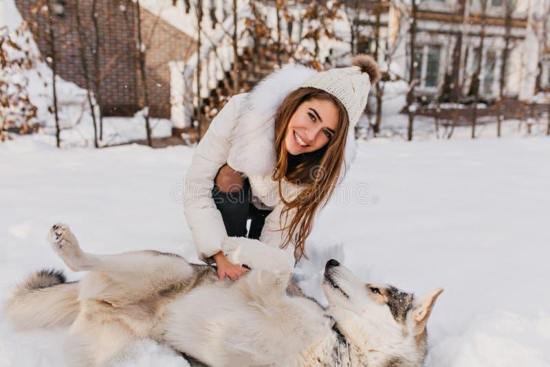 使用与在雪的多壳的狗的令人惊讶的微笑的女孩的愉快的冬时 有长的深色的头发的迷人的年轻女人 免版税库存图片