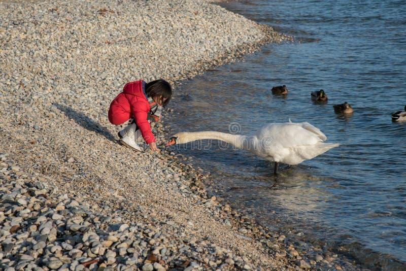 使用与天鹅,纳沙泰尔镇在冬天,瑞士,欧洲的亚裔女孩 免版税库存图片