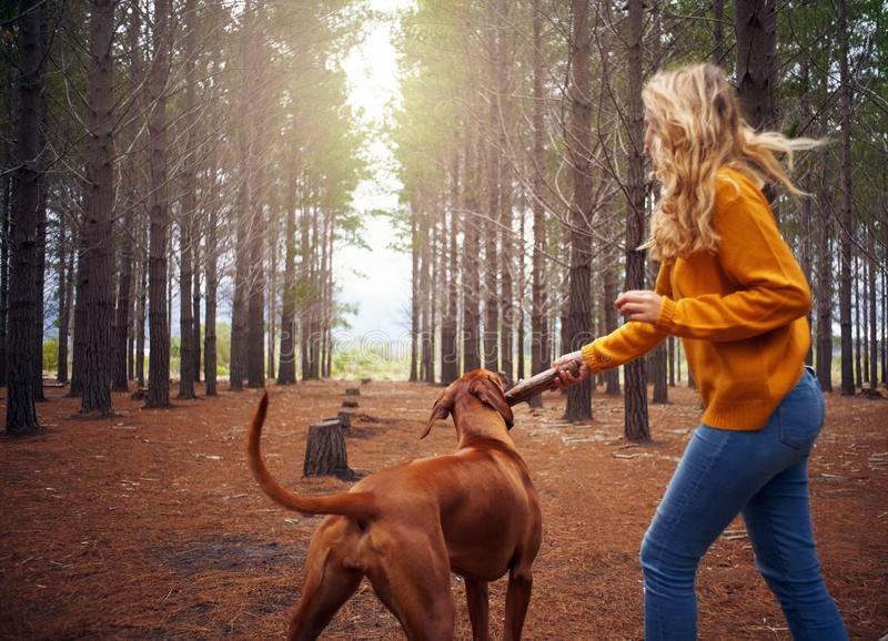 使用与她的狗的年轻女人在森林里 免版税库存照片