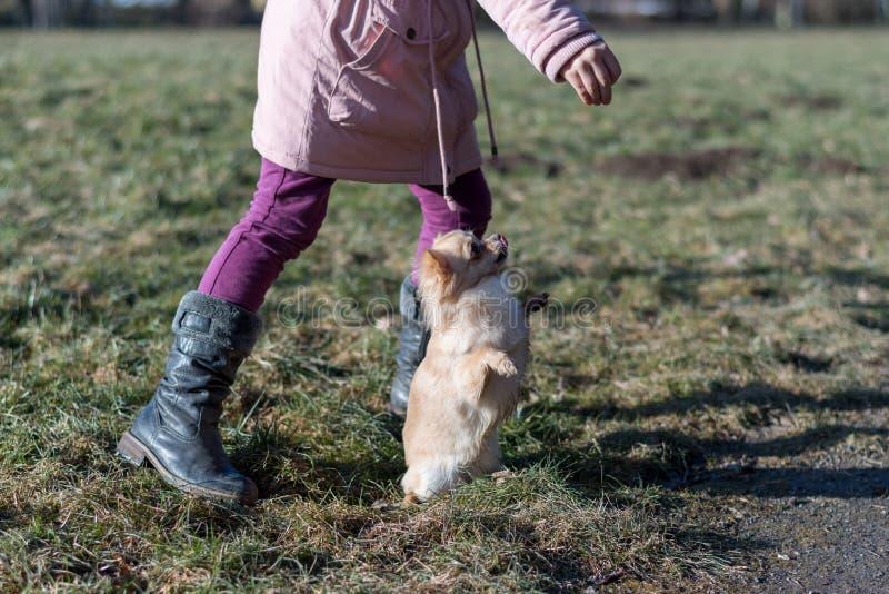 使用与她的狗的年轻gril外面在领域 免版税图库摄影