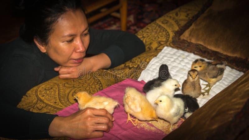 使用与婴孩小鸡的亚裔妇女 免版税库存照片